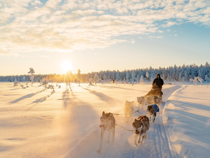 Picture of Lapland Travel